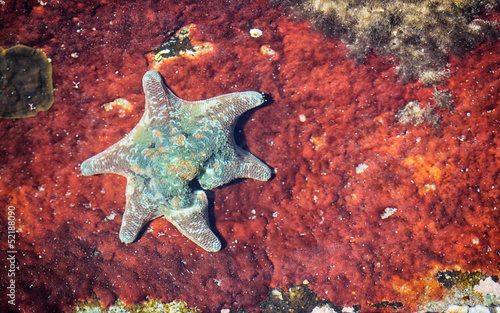starfish on rusted metal