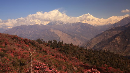 Dhaulagiri peak with rhododendrons, Himalayas. Time Lapse.
