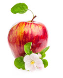 Red Apple with flowers isolated on white background
