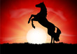 Silhouette of a horse reared at sunset