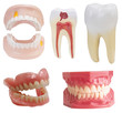 Teeth dental prostheses