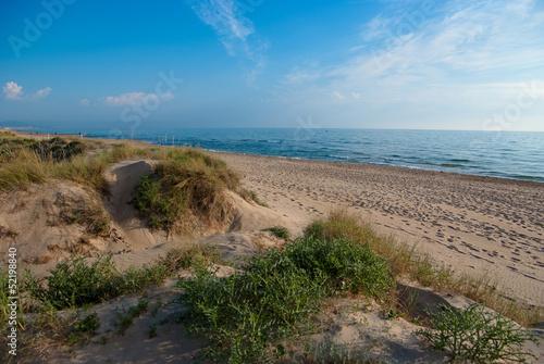 Beach Dune