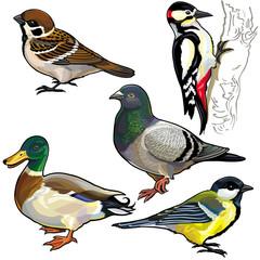 set with wild european birds