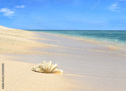 Sea shell on sandy beach with blue sky