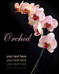 brick red orchid