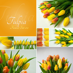 Tulpia Flower Set 02