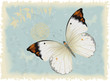 Butterfly on a blue retro styled background
