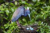 Bird and three eggs
