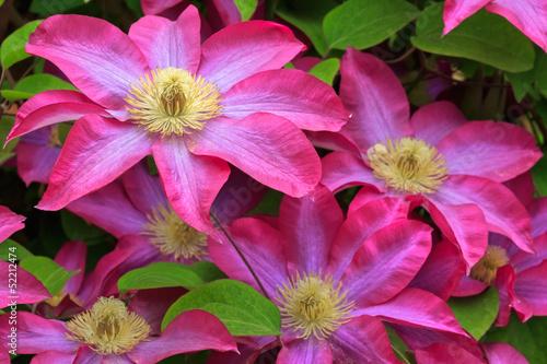 In de dag Macro flowers