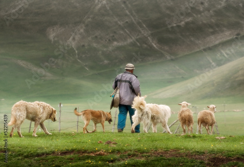 sheep with shepherd and dogs