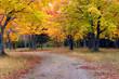 Autumn Day in Michigan