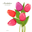 Isolated bouquet of tulips for your design