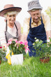 Elderly couple gardening together