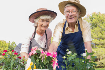 Elderly couple gardening