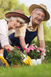 Retired couple gardening together and smiling portrait
