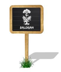 Baldrian Heilkräuter Vektor