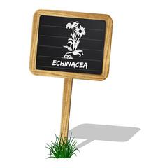 Echinacea Heilkräuter Vektor
