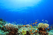 Leinwanddruck Bild - Underwater Coral Reef and Tropical Fish