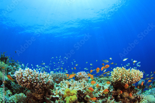 Leinwanddruck Bild Underwater Coral Reef and Tropical Fish