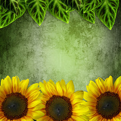 Green Leaves Frame ans Sunflowers  On grunge Green  Background