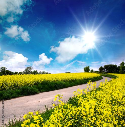 Frühling in der Pfalz: Weg durch blühendes Rapsfeld - 52234609
