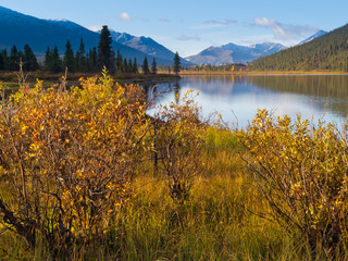 Willows at the shore of Lapie Lake Yukon T Canada