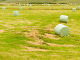 Harvesting cut grass for hay plastic wrapped bales
