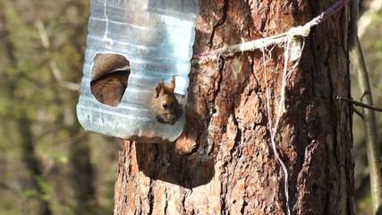 Squirrel in a manger