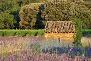 le cabanon en pierre au milieu du champ de lavande