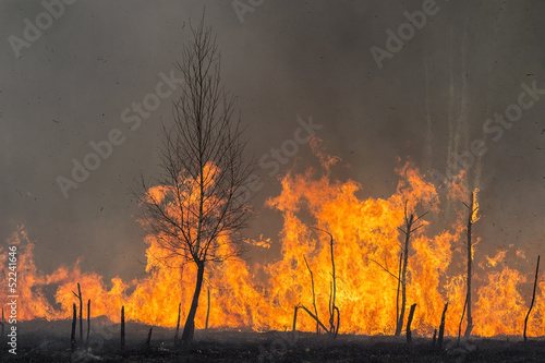 Forest Fire Flames