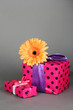 Beautiful Gerber flower with gifts on grey background