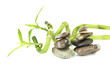 Still life with green bamboo plant and stones, isolated on