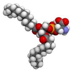 Phosphatidylserine (PS) cell membrane building block, molecular
