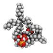 Cardiolipin (tetraoleoylcardiolipin) mitochondrial membrane lipi