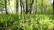Forest glade with flowers. Slow motion. Stabilized  video.