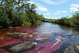 Canio Cristales mountain river. Colombia