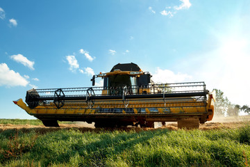 Yellow harvester combine on field harvesting gold wheat