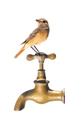 Bird and faucet.