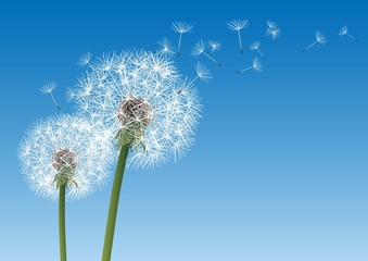 vector dandelion on a wind loses the integrity © chrupka