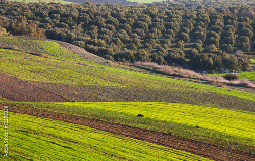 Fields in Morocco
