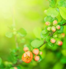 Defocus beautiful red spring flowers