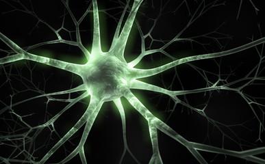 Floureszierendes Neuron