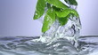 Fresh mint falls under water with a splash.
