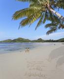 plage des Seychelles sous les cocotiers