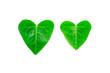 ハートの葉