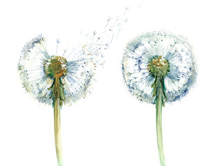 couple od dandelions