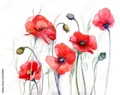 poppy - 52270810