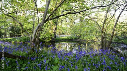 Bluebell Woods and Pond