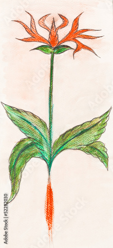illustration of flower herb