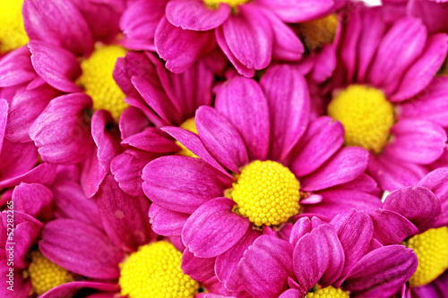 Foto op Aluminium Macro Beautiful violet red dahlia flowers.Сloseup